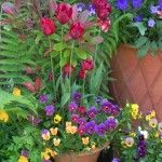 Whichford Potteries & Container Gardening