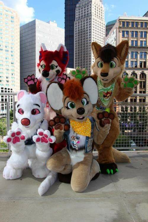 1000+ images about Fursuiting on Pinterest | Furry ... Ruffled Designs Fursuit