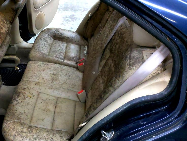 Treat And Prevent Mold And Mildew In Home And Cars Natural Remedies Cars Home And Natural
