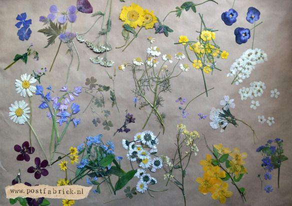 Diy met gedroogde bloemen