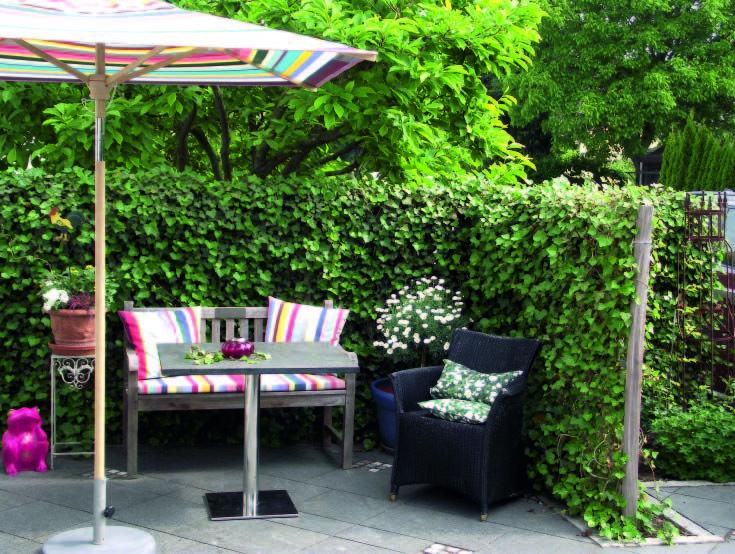 die besten 25 sichtschutz efeu ideen auf pinterest bankirai bankirai terasse und sichtschutz. Black Bedroom Furniture Sets. Home Design Ideas