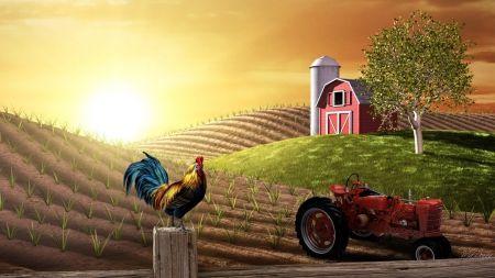 農場での日の出 フィールズ 自然 高解像度で壁紙