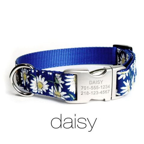... Designer Dog Collar with Personalized Buckle – Flying Dog Collars