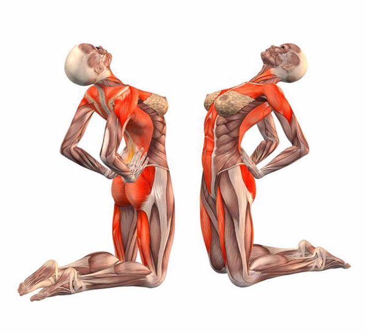 Экология здоровья: Данное упражнение позволяет дополнительно прорабатывать тонические волокна брюшного пресса...