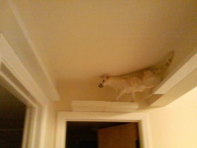 ikea cat climbing shelves   Cat climbing post and skyway