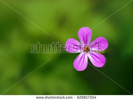 Blooming wild flower, soft look, blurry background.