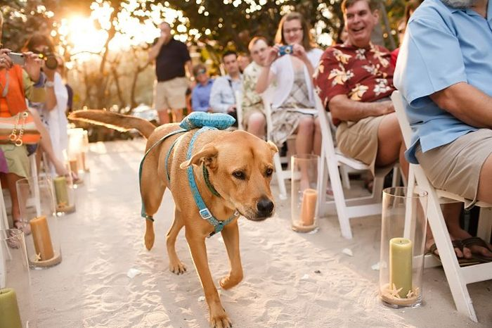 Awesome dog friendly wedding ideas! I'm definitely .making my dog my ringbearer
