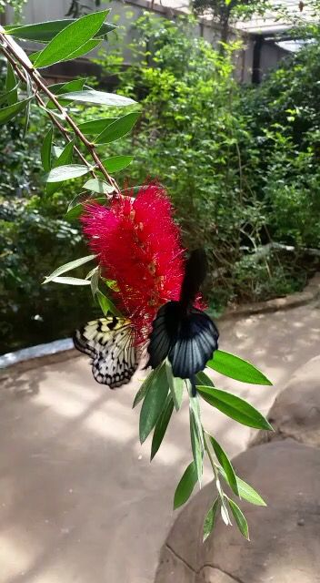 Wow a pic I've taken at Butterfly Sanctuary Midlands South Africa