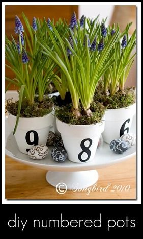 cute idea to put herbs in there and place it in the kitchen!