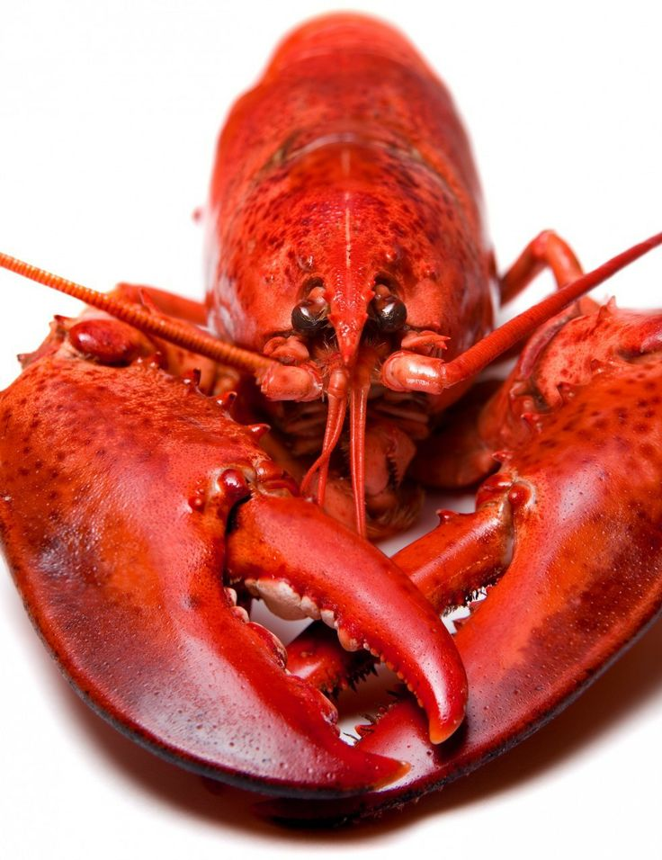 """LIKE AND SHARE"" TO WIN A LOBSTER DINNER FOR 2  ""Like and Share"" a recipe, Photo or Video  To Win a FREE Lobster Dinner For 2!  We will pick one person a month randomly that has ""liked and shared on their profile"" a photo, recipe or video from our lobster fan page. 2 Lobster will be mailed to you.  https://www.facebook.com/pages/Wholesale-LIVE-Lobster-Delivery/446564378804265"