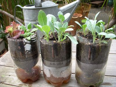 Self watering pots from plastic bottles...now this is a good idea for growing your own herb garden...I for one forget to water my plants...maybe this will help...and it is cheap too!
