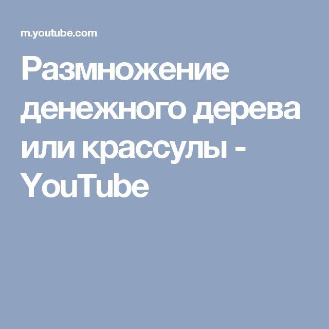 Размножение денежного дерева или крассулы - YouTube