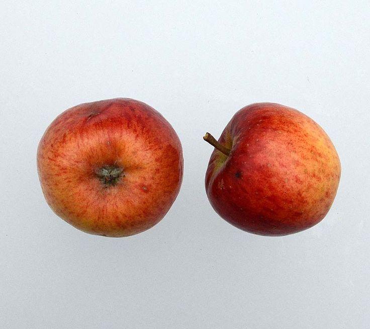 Gamle og nye æblesorter, danske og udenlandske