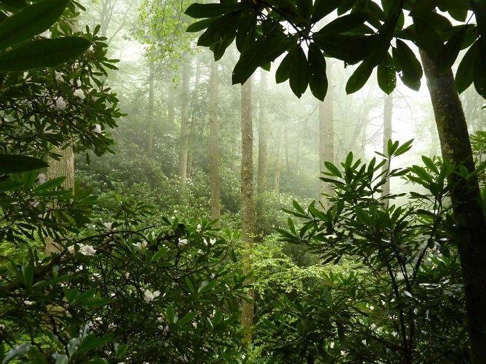 Highlands Botanical Gardens, Highlands, North Carolina
