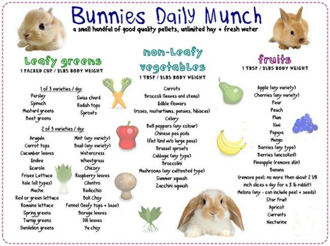 Can Bunnies Have Dog Food