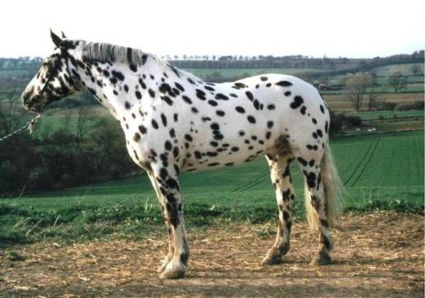 These Unusual Horses Make Even Unicorns Seem Normal