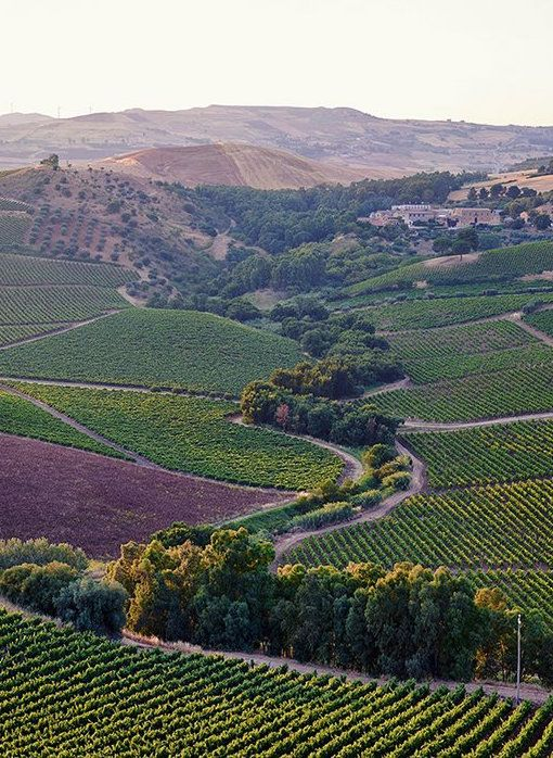 Sicily's Wine Country
