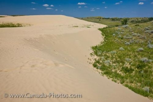These are a blast!  Near the town of Sceptre are the sand dunes at the Great Sand Hills, Saskatchewan, Canada