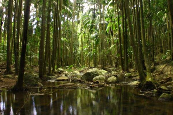 Rainforests of Tamborine Mountain