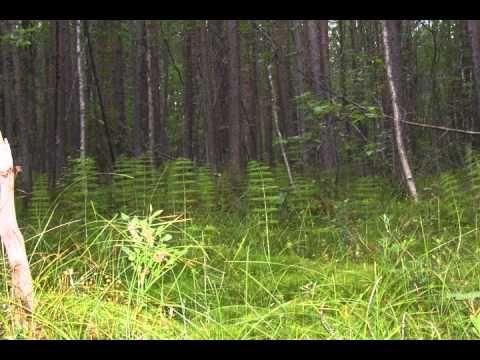 ▶ Магический лес. Программа исполнения желаний - YouTube