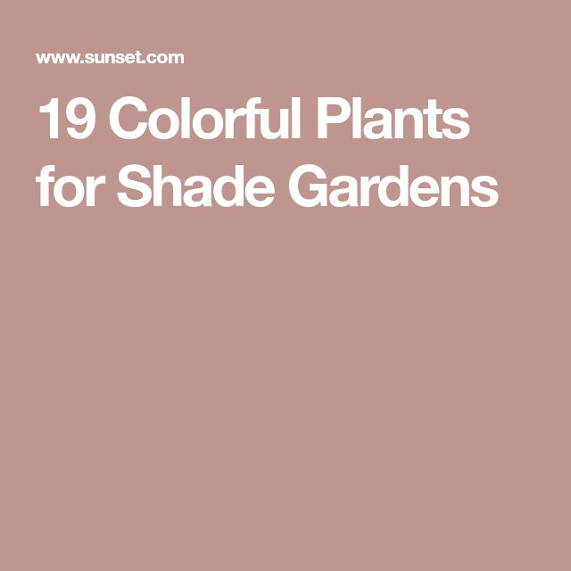 19 Colorful Plants for Shade Gardens