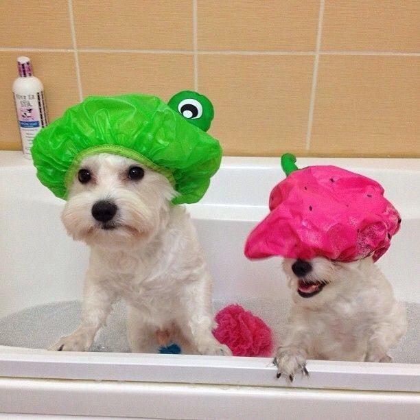 Use uma chaleira para enxaguar os cães na banheira e assim evitar que a água e o sabão caiam nos olhos deles.