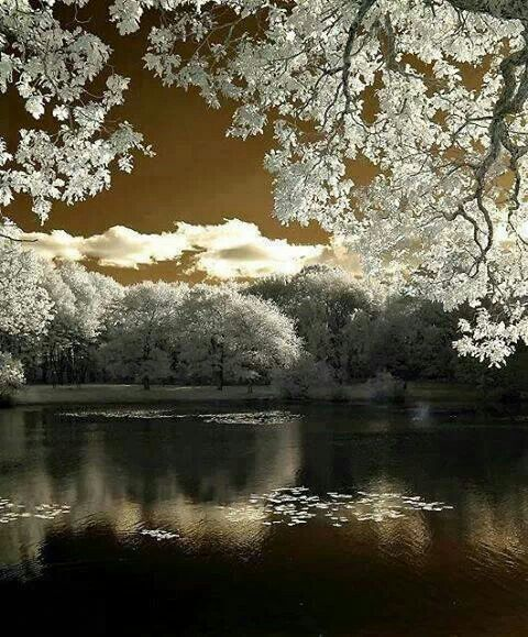 # WINTER AT THE LAKE