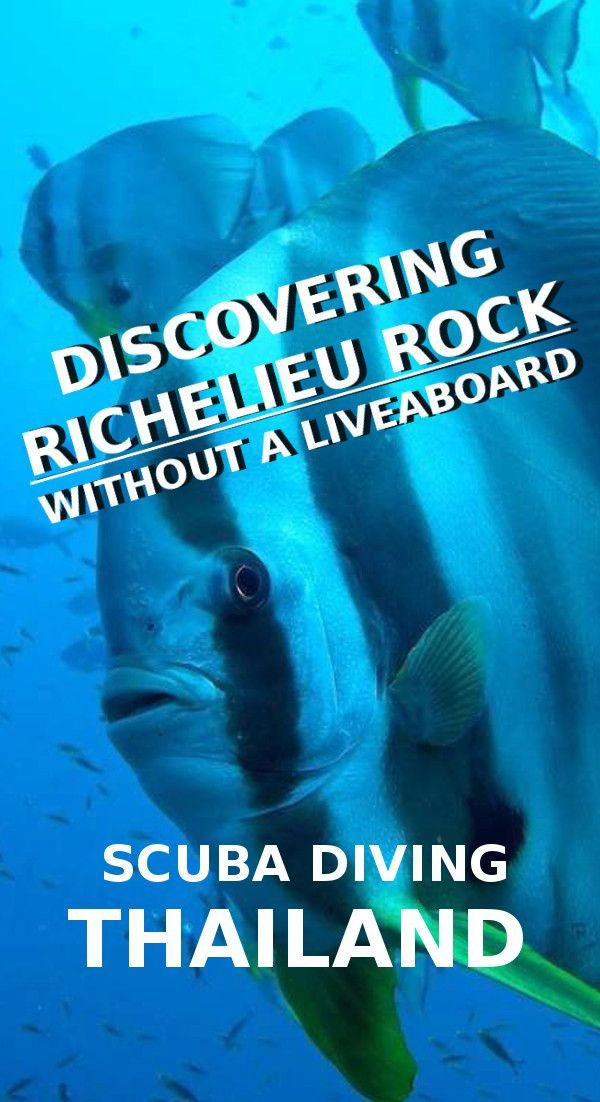 Discovering Richelieu Rock without a liveaboard, Thailand! The best dive spot in Thailand is arguably Richelieu Rock which is accessible with a day trip. Explore what lies beneath at this incredible dive spot in the Surin National Park, just North of the Similan Islands in the Andaman Sea. http://www.diveoclock.com/destinations/Asia/Thailand/Richelieu_Rock/ ocean | sea life | diving | coral reef | scuba diver | underwater photography | duiken | tauchen | dive spot | Asia | marine life