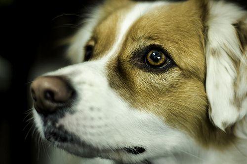 0158 #perro #dog #can #nacho #hocico #olfato