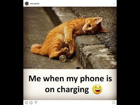 Funny Videos 2019 Really Funny Memes Crazy Funny Memes Funny Animal Quotes