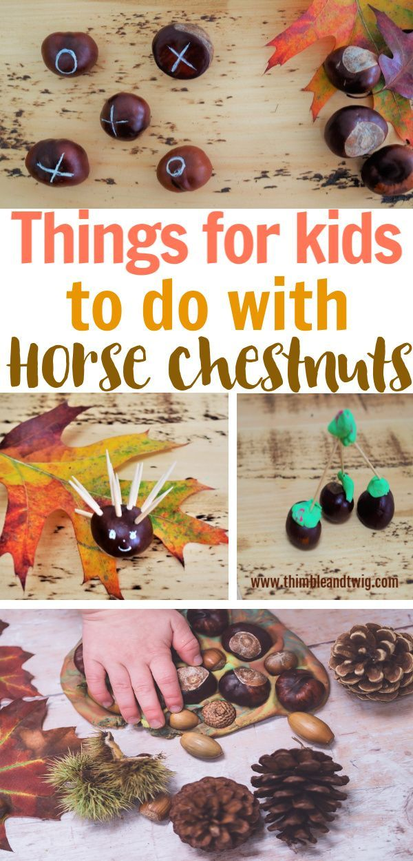 5 Things For Kids To Do With Conkers Fun Fall Crafts Autumn Activities For Kids Crafts For Kids