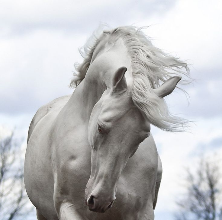 Horse. His is a power enhanced by pride, a courage heightened by challenge. His is a swiftness intensified by strength, a majesty magnified by grace. His is a timeless beauty touched with gentleness, a spirit that calls our hearts to dream.  http://www.annabelchaffer.com/categories/Equestrian-Gifts/