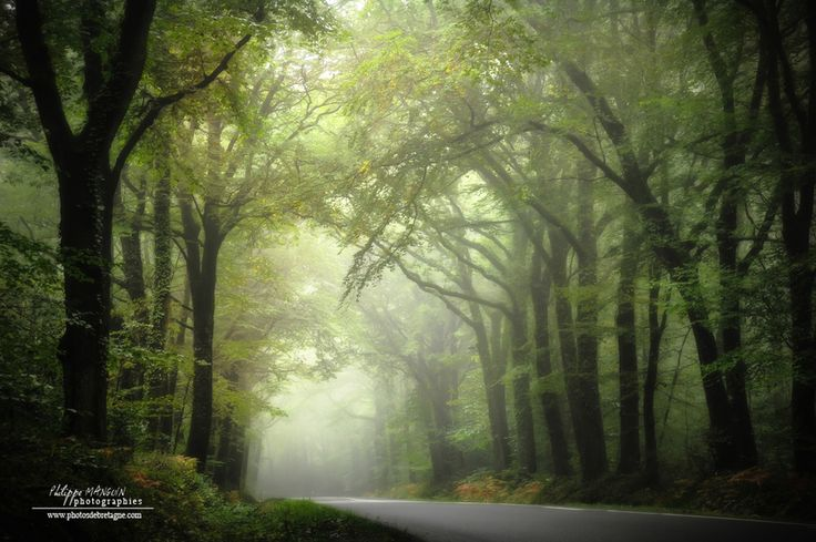 To the green land.... Broceliande forest - Britany - France
