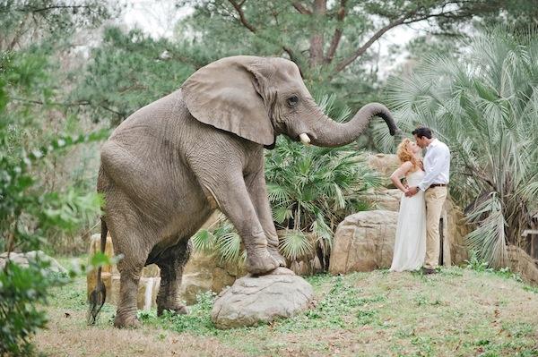 !!: Dream Come True, Xd Wedding Ideas, African Safari, Weddings, Dream Wedding, Elephants 3, Animal