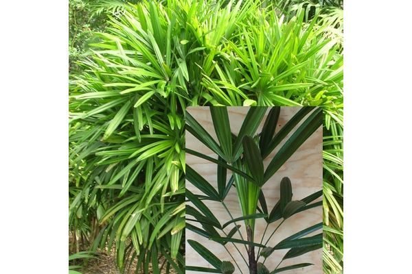 1000 images about indoor plants for the nt on pinterest popular plants and leaves - Indoor plants for shade ...