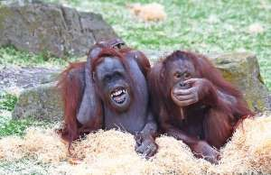 Laughing Animals - Blackpool Zoo/Rex Features