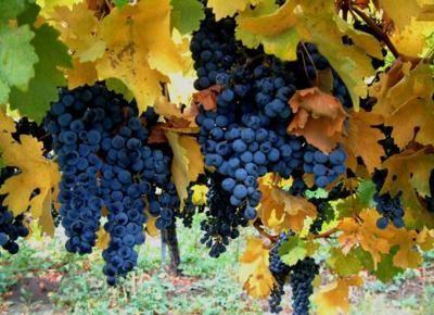 non solo uva ma anche tanti colori