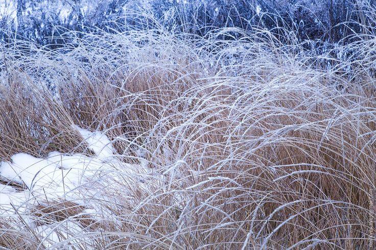 Deadwood in winter by Mark Sivak on 500px