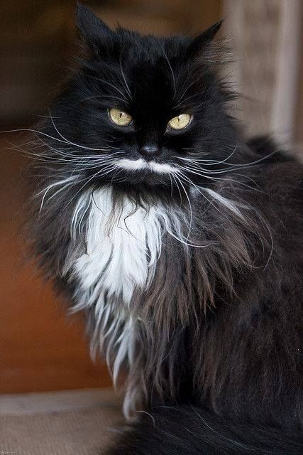 Love the white moustache and whiskers!