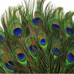 100pcs New Real Natural Peacock Tail Eyes Feathers 8-12 Inches/about 23-30cm | eBay