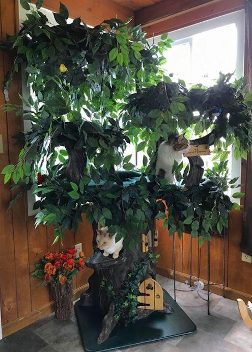 Mejores 1248 im genes de casa de gatos en pinterest - Arbol gato ikea ...