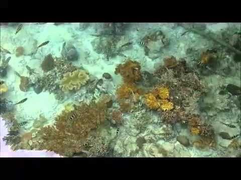 Indahnya Pantai Ora di Maluku Tengah - Maluku