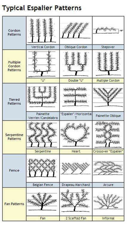 chart of espalier shapes - Espalier Services via Atticmag (trees grown against walls)