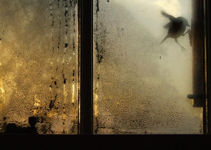 Saul Leiter, - Google Search