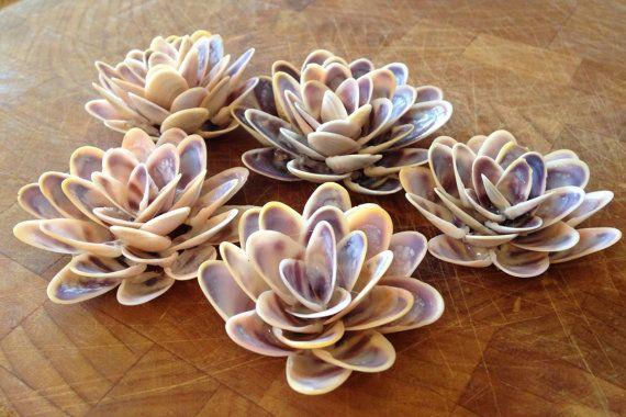 Zo mooi als een Monet schilderen, elke zeeschelp waterlelie hier is een traktatie!  U ontvangt deze 5 waterlelies gemaakt van stevige schelpen.