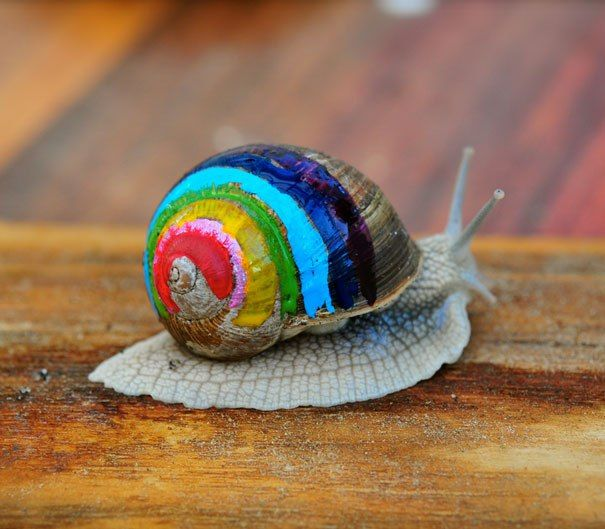 """Painting Snail Shells May Keep Them From Getting Smushed - """"To save these creatures from our boots, some compassionate people started to paint their shells. When these snails' shells are colorfully painted, it's hard to miss them crawling around. If you want to decorate your garden snails' shells be sure to use non-toxic paint only, and try not to scare the snail too much or she may crawl out and leave her house behind!"""""""