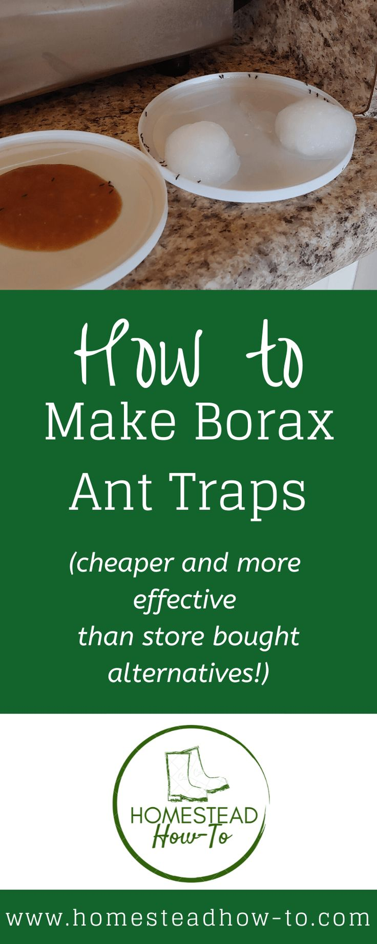 How to make a borax ant trap homestead howto in 2020