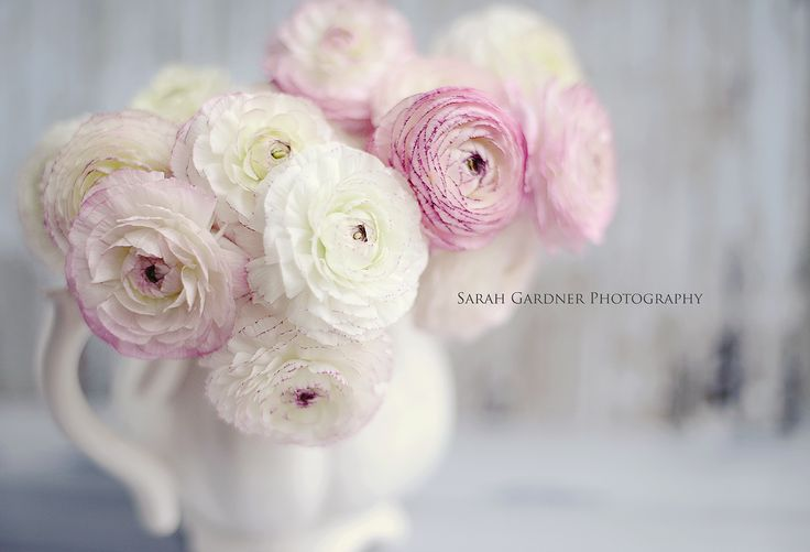 Photography by Sarah Gardner http:///sarahgardnerphotography.blogspot.co.uk