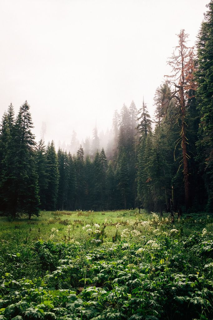 Hidden Valley, Sequoia Forest. by Steven Saillant | Beauty | wide open space |
