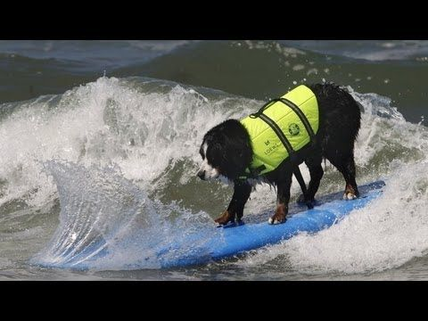 Dogs Ride the Waves in Charity Surf Competition